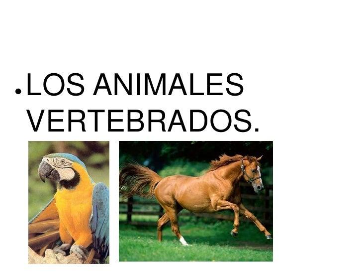 ●   LOS ANIMALES    VERTEBRADOS.