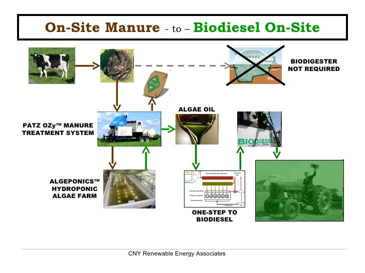 On-Site Manure   - to –  Biodiesel On-Site BIODIGESTER NOT REQUIRED ONE-STEP TO BIODIESEL ALGEPONICS™ HYDROPONIC ALGAE FAR...