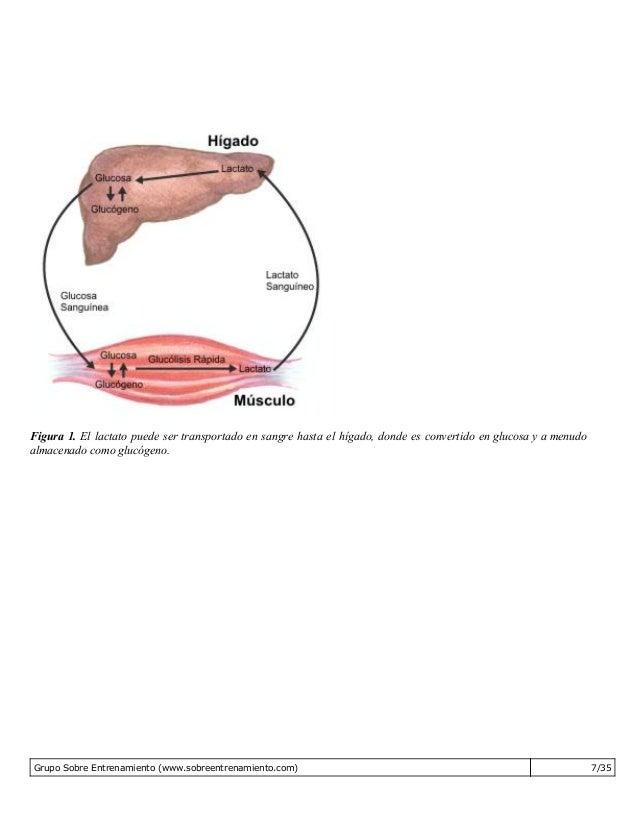 Aprender cómo calcular tu metabolismo basal