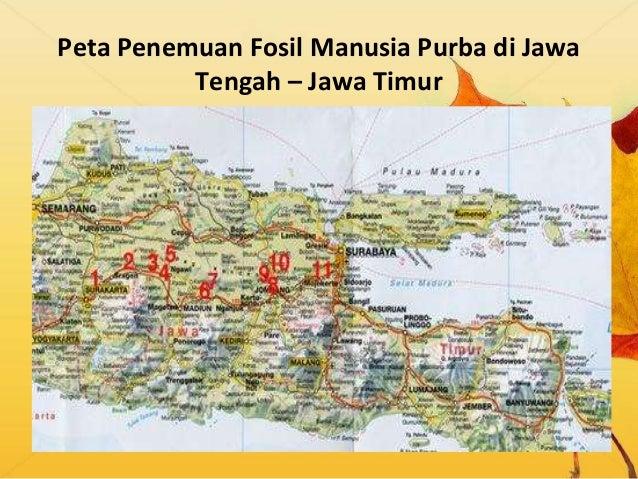 Manusia Purba Di Indonesia