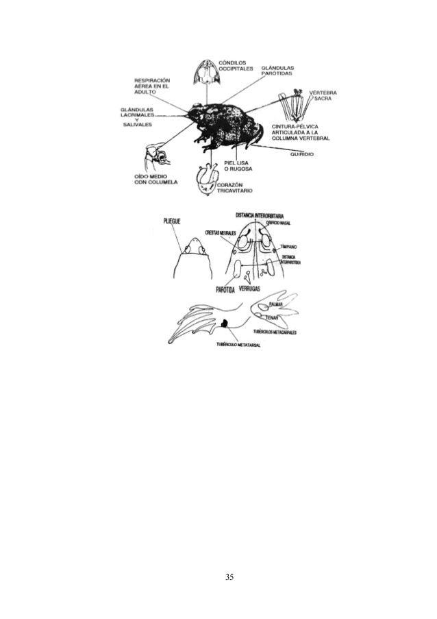 Etiquetando Las Principales Características Anatómicas - Sitapati