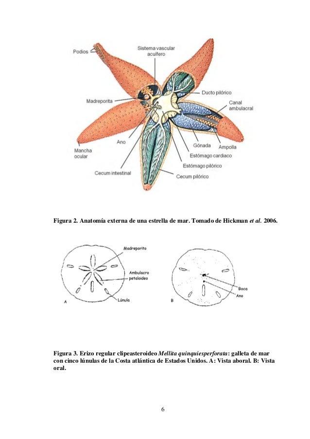 Moderno Prácticas De Etiquetado Anatomía Embellecimiento - Imágenes ...