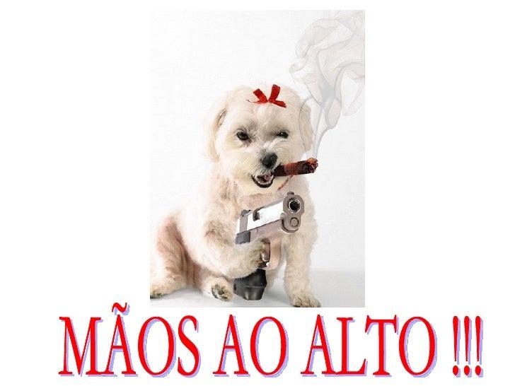 MÃOS AO ALTO !!!