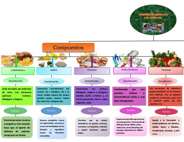 Mapa Conceptual Biologia