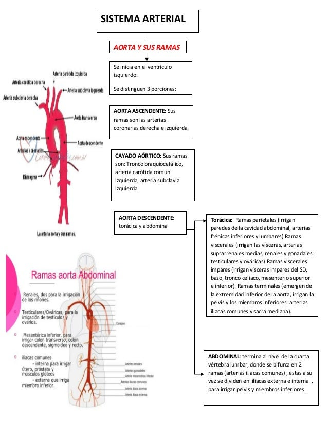 Mapa sistema-arterial