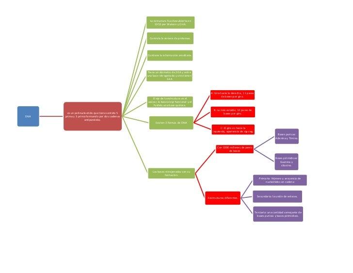 Mapa Biologia Molecular