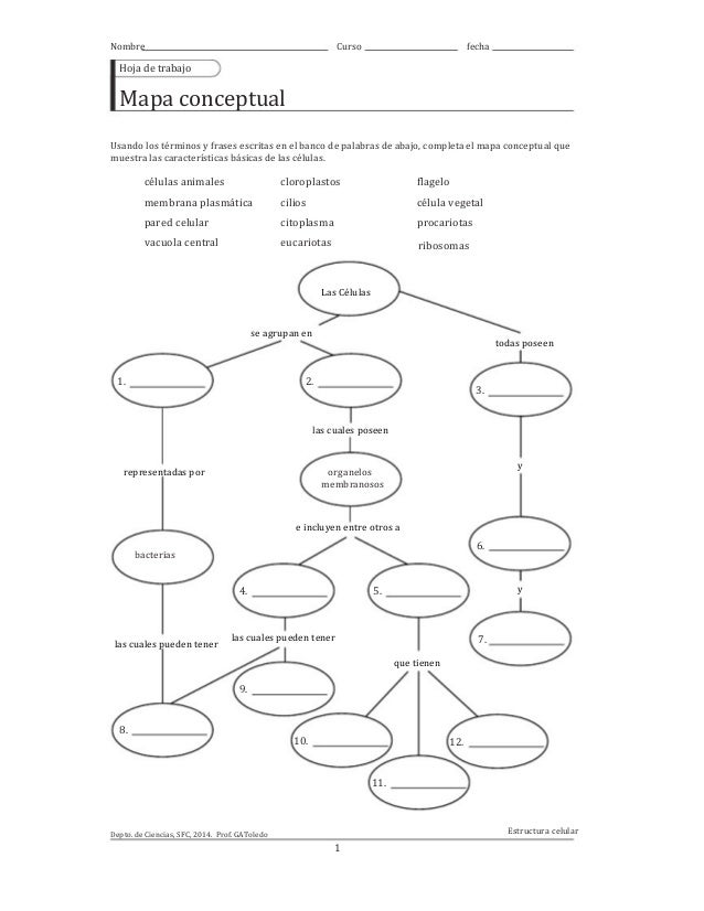 Mapa conceptual: características básicas de las células, octavo bási…