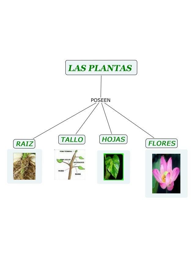 Mapa Conceptual Las Plantas