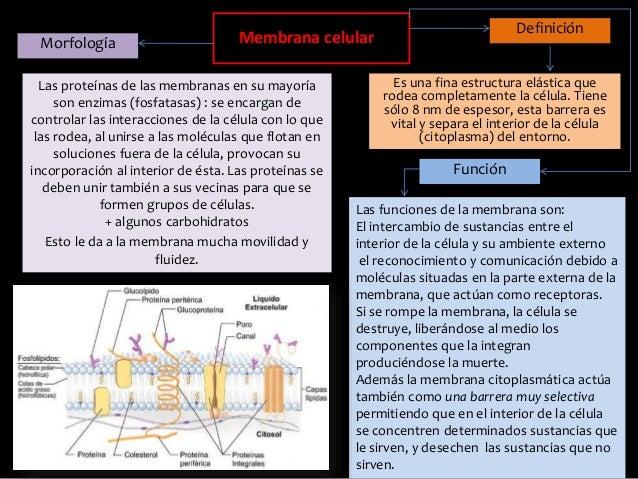 Mapa Conceptual Membrana Celular