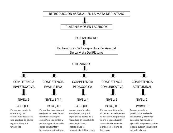 Reproduccion asexual en plantas mapa conceptual del