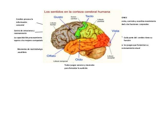 Mapa connceptual del cerebro1