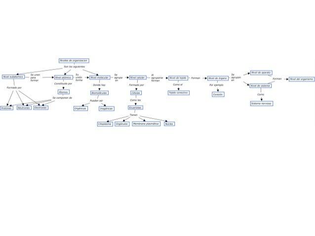 Niveles de organizacion  San ias siguientes  4/ su Se                         Se unen A!  para ——> Nivel atómico unión —> ...