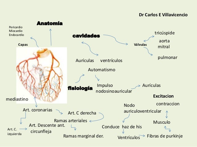 Mapas conceptuales anatomía y fisiología del corazón