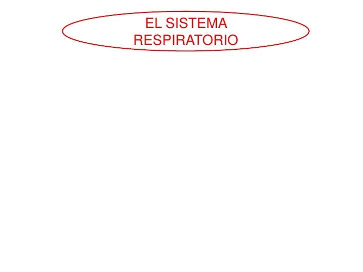 EL SISTEMARESPIRATORIO