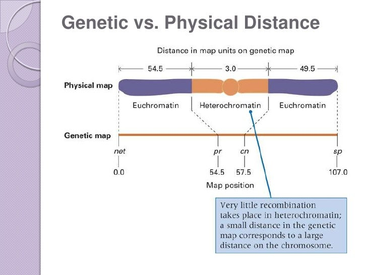 genome-mapping-57-728 Genetics Map Units on pedigree chart, map unit biology, dihybrid cross, monohybrid cross, test cross, punnett square, wild type, map units gene mapping, map genetic diseases, genetic screen, reciprocal cross,