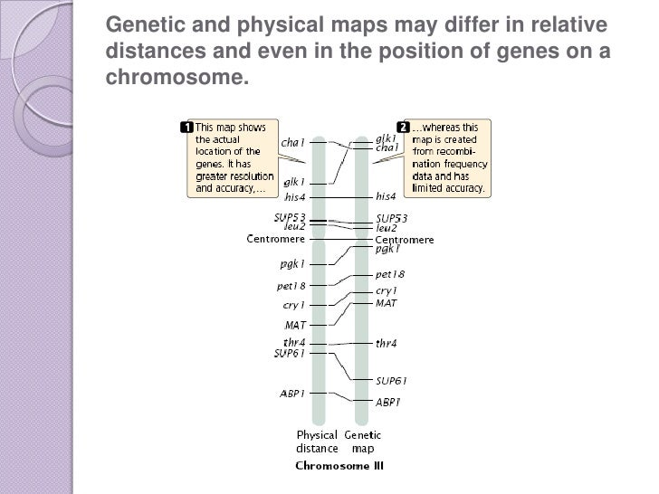 Genome Mapping on human genome, cognitive mapping, human genome project, restriction maps, thomas morgan's linkage mapping, gene map, molecular genetics, quantitative trait locus, three-point cross, community mapping, dna mapping, mental mapping, mendelian inheritance, snp genotyping, genome-wide association study, association mapping, genetic marker,