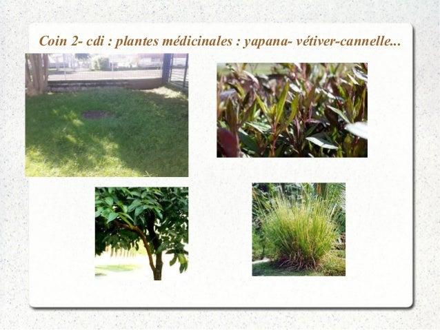 Coin 2- cdi : plantes médicinales : yapana- vétiver-cannelle...