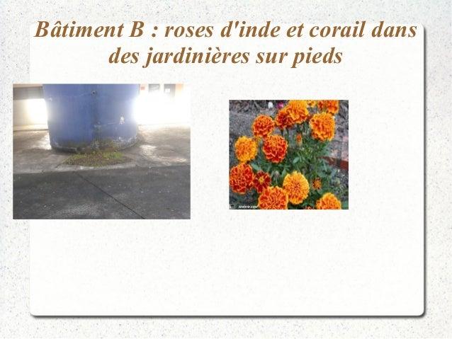 Bâtiment B : roses d'inde et corail dans  des jardinières sur pieds