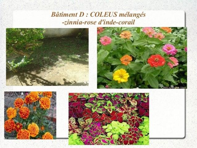Bâtiment D : COLEUS mélangés  -zinnia-rose d'inde-corail