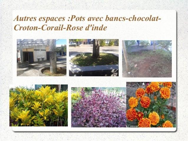 Autres espaces :Pots avec bancs-chocolat-  Croton-Corail-Rose d'inde