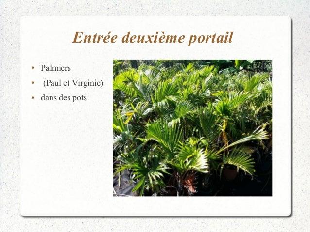 Entrée deuxième portail  ● Palmiers  ● (Paul et Virginie)  ● dans des pots