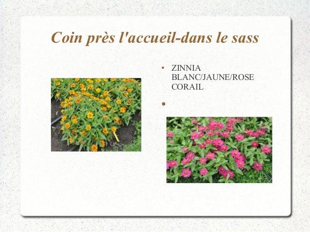 Coin près l'accueil-dans le sass  ● ZINNIA  BLANC/JAUNE/ROSE  CORAIL  ●