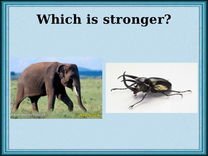 Which is stronger?