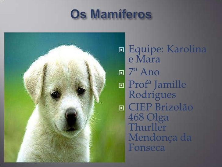 Os Mamíferos<br />Equipe: Karolina e Mara<br />7º Ano<br />ProfªJamille Rodrigues<br />CIEP Brizolão 468 Olga Thurller Men...