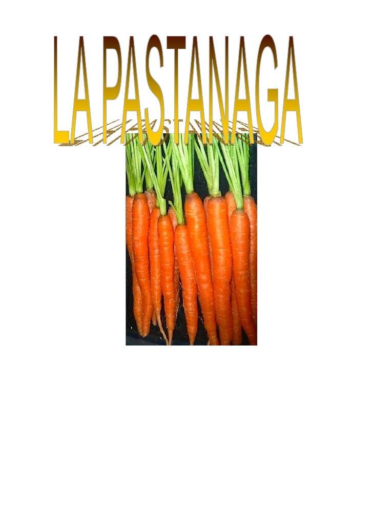 NOM DE LA PLANTA     Nom en català: pastanaga •   Nom en castellà: zanahoria •   Nom en anglès: carrot   Origen o procedèn...