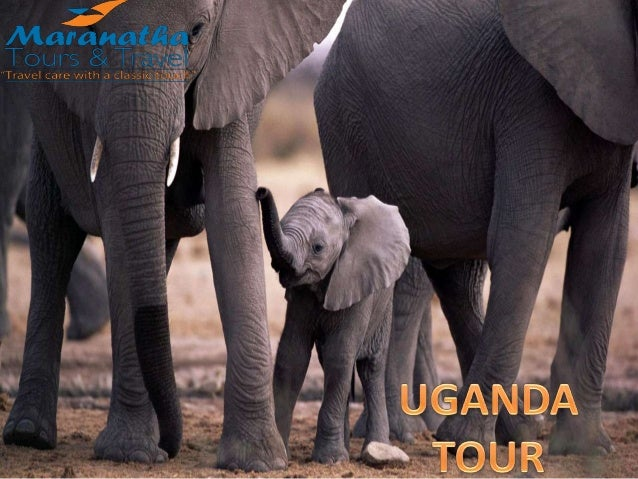 11 Days Safari- Birds in Uganda