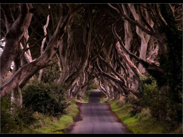 Es un tramo único de carretera cerca de Bregagh Armoy,en el condado de Antrim, Irlanda. Las hayas que custodian    el cami...