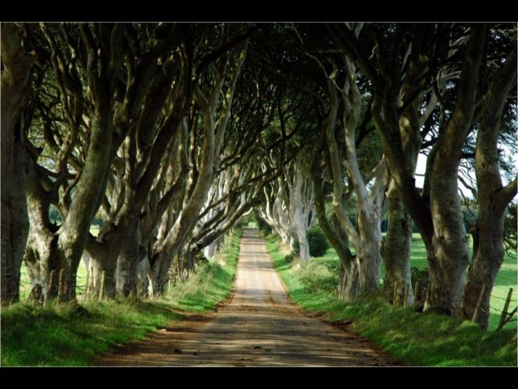 Ésta vez, la naturaleza se ha adaptado al paso del   hombre en forma de tren. Un denso bosque  acompañando una vía ha form...