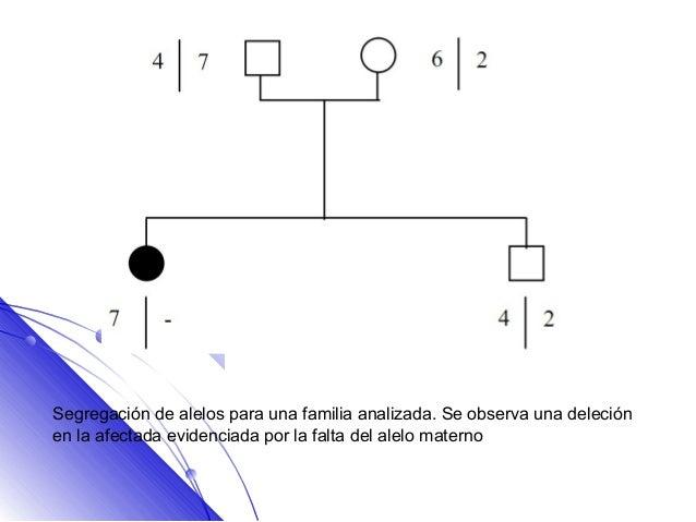 Segregación de alelos para una familia analizada. Se observa una deleciónen la afectada evidenciada por la falta del alelo...