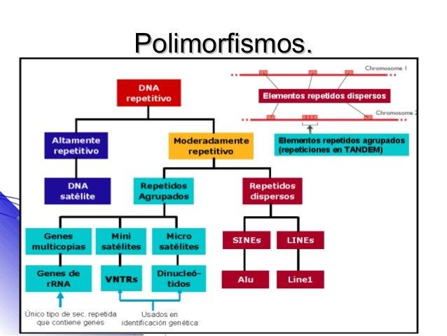 Polimorfismos.
