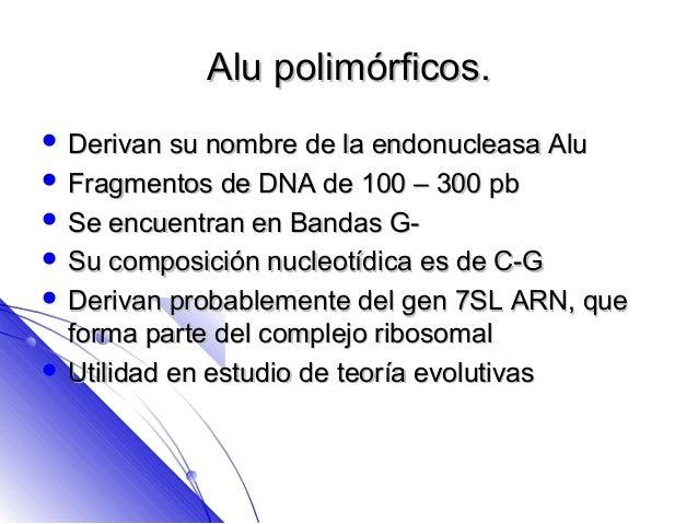 Alu polimórficos. Derivan  su nombre de la endonucleasa Alu Fragmentos de DNA de 100 – 300 pb Se encuentran en Bandas G...