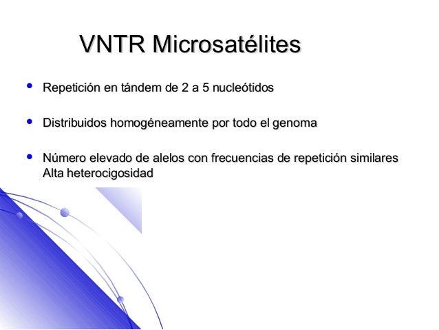 VNTR Microsatélites   Repetición en tándem de 2 a 5 nucleótidos   Distribuidos homogéneamente por todo el genoma   Núme...