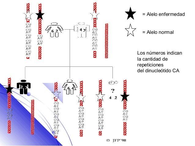 = Alelo enfermedad  = Alelo normalLos números indicanla cantidad derepeticionesdel dinucleótido CA
