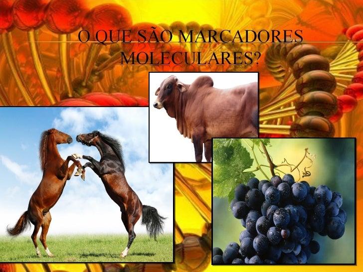 Marcadores moleculares Slide 2