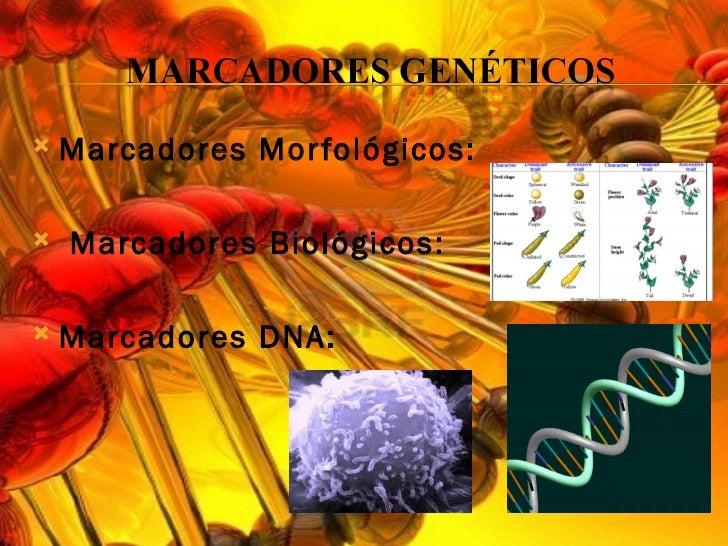 Marcadores moleculares Slide 3