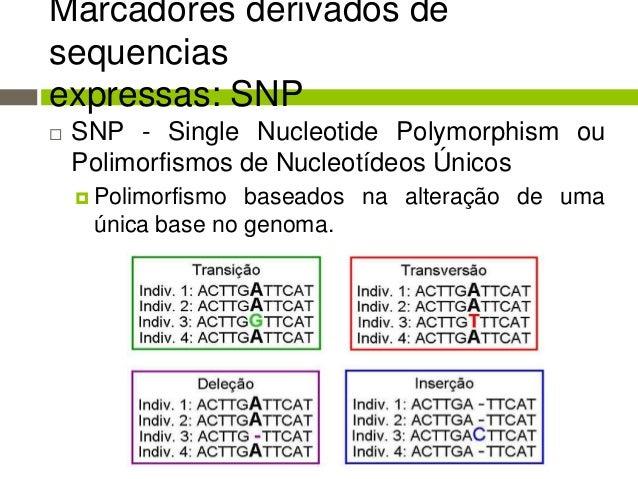 Marcador molecular Slide 3