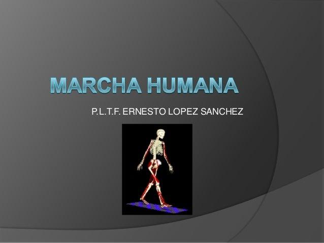 P.L.T.F. ERNESTO LOPEZ SANCHEZ