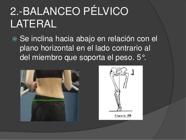 3.- FLEXIÓN DE LA RODILLA DESPUÉS DEL CONTACTO DEL TALÓN EN LA FASE DE APOYO  El miembro inferior que sostiene el cuerpo,...