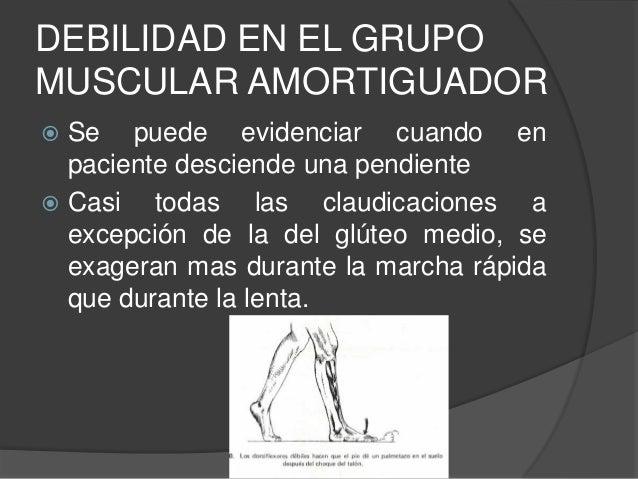  Esta acción crea un momento de rotación de la cadera en extensión fijándola a los ligamentos del extensor del muslo, dán...