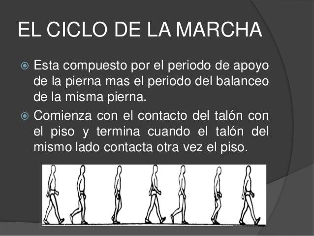 EL CICLO DE LA MARCHA  Esta compuesto por el periodo de apoyo de la pierna mas el periodo del balanceo de la misma pierna...