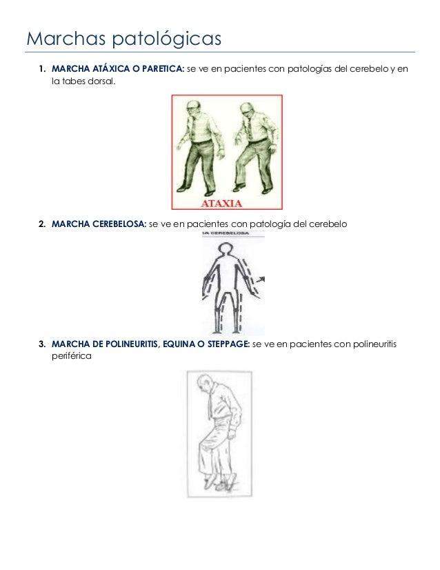 Marchas patológicas1. MARCHA ATÁXICA O PARETICA: se ve en pacientes con patologías del cerebelo y enla tabes dorsal.2. MAR...