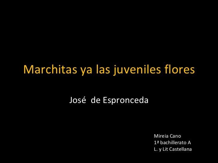 Marchitas ya las juveniles flores José  de Espronceda Mireia Cano 1ª bachillerato A L. y Lit Castellana