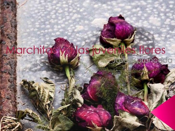 Marchitas ya las juveniles flores<br />José Espronceda<br />