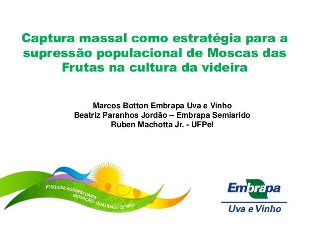 Captura massal como estratégia para a supressão populacional de Moscas das Frutas na cultura da videira  Marcos Botton Emb...