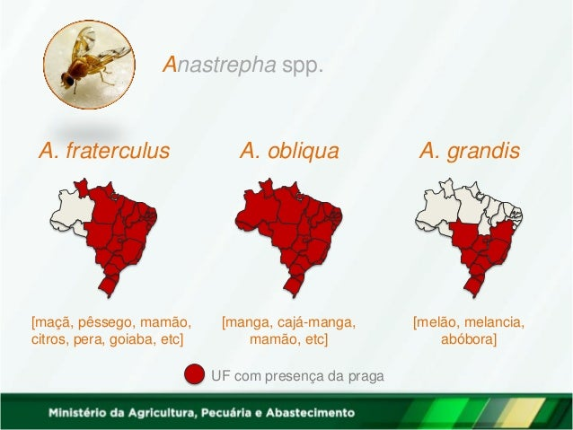 Anastrepha spp. A. fraterculus A. obliqua A. grandis [maçã, pêssego, mamão, citros, pera, goiaba, etc] [manga, cajá-manga,...
