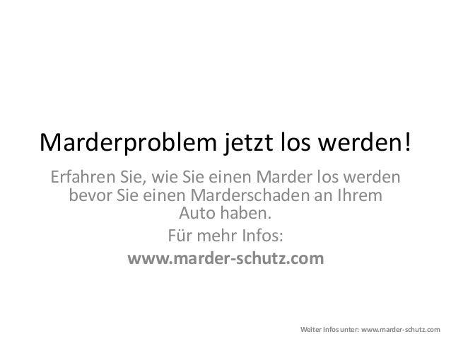 Marderproblem jetzt los werden!Erfahren Sie, wie Sie einen Marder los werdenbevor Sie einen Marderschaden an IhremAuto hab...
